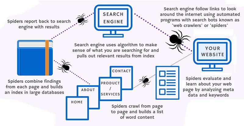 googlebot or google bot